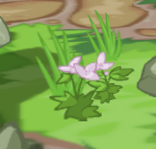 ullabulb flowers